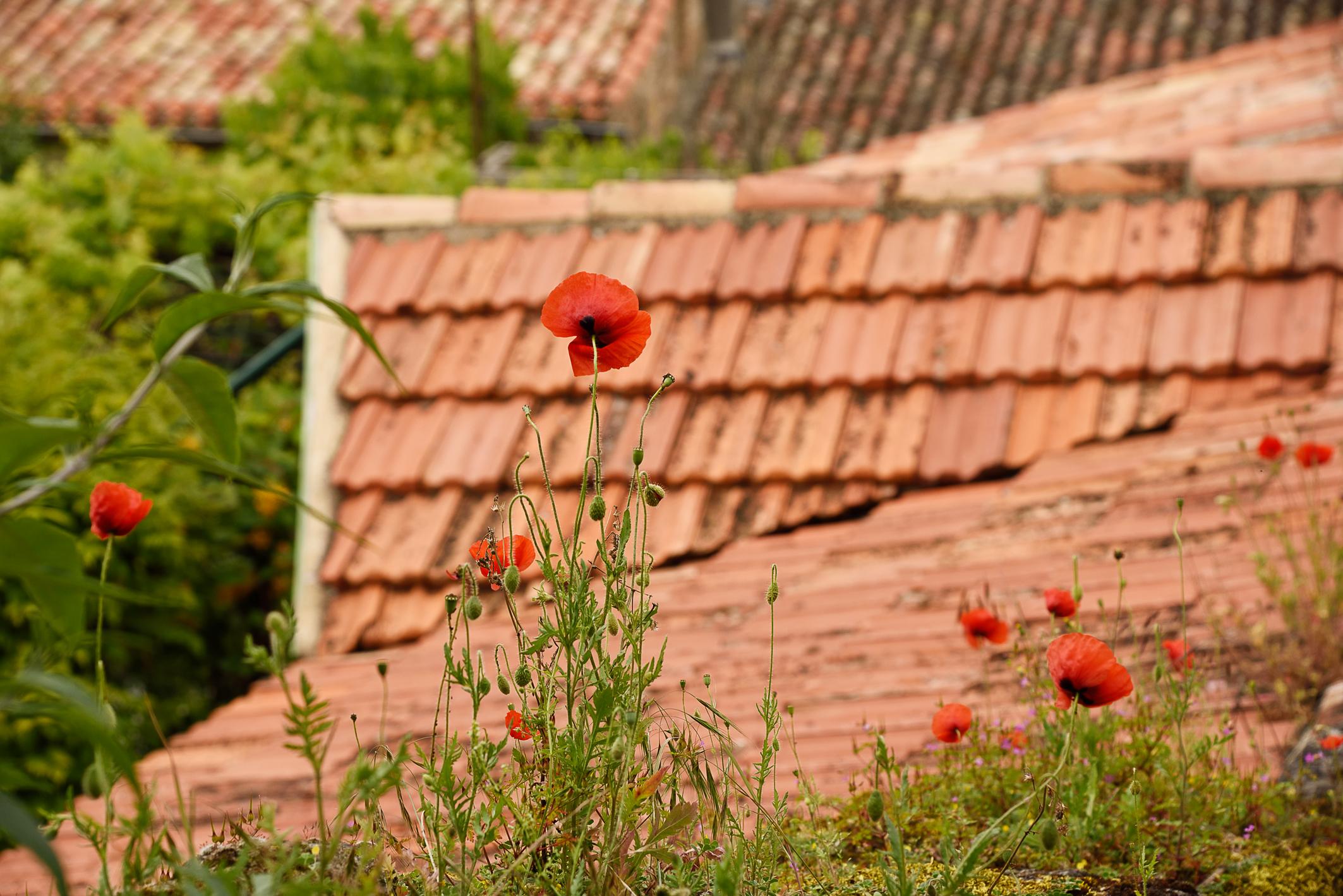 Sur les traces de Toulouse-Lautrec en Pays de Cocagne – 1